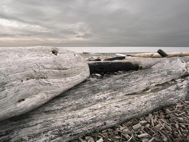 Landscape Photograph - Log Whale by Paul Aiello