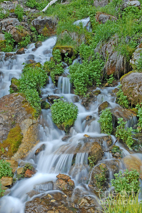 Logan Canyon Photograph - Logan Canyon Cascade by Dennis Hammer