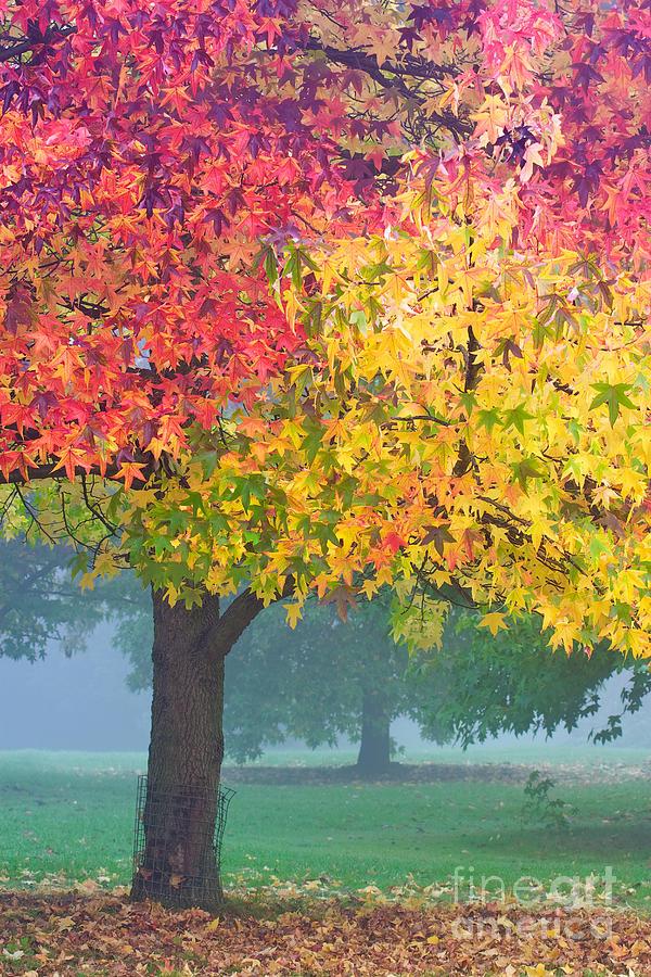 Autumn Photograph - London Autumn by David Bleeker