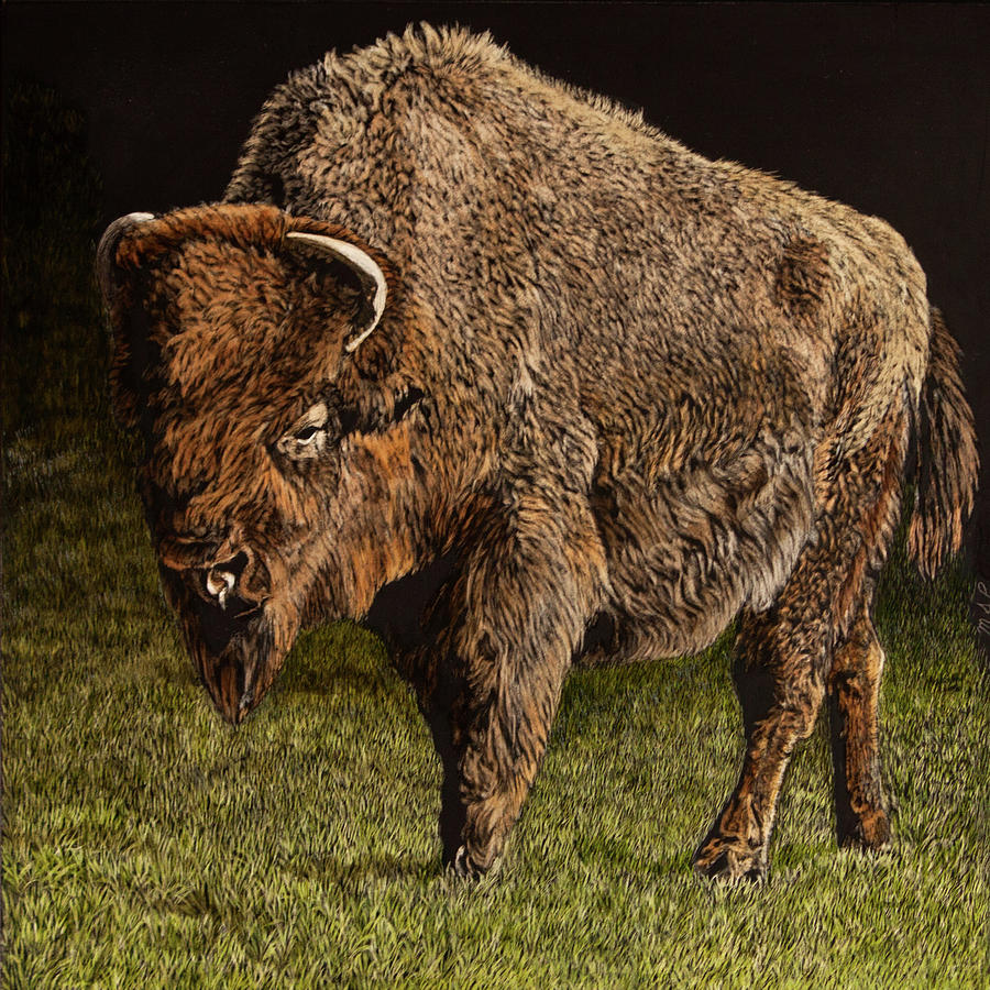 Lone Bison by Margaret Sarah Pardy