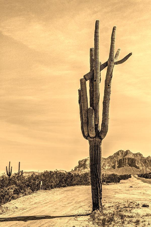 Lone Cactus Digital Art