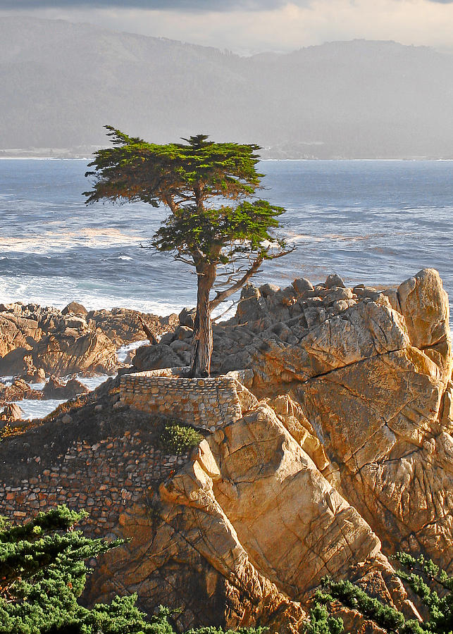 Pine Photograph - Lone Cypress - The icon of Pebble Beach California by Christine Till