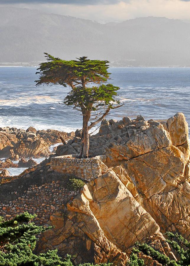 Lone Cypress - The Icon Of Pebble Beach California Photograph