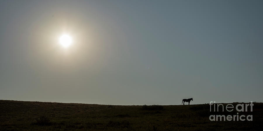 Lone Horse At Teddy Roosevelt National Park Photograph