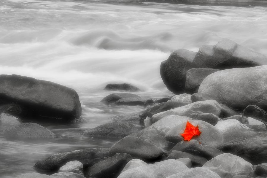 Leaf Photograph - Lone Leaf by Kenneth Krolikowski