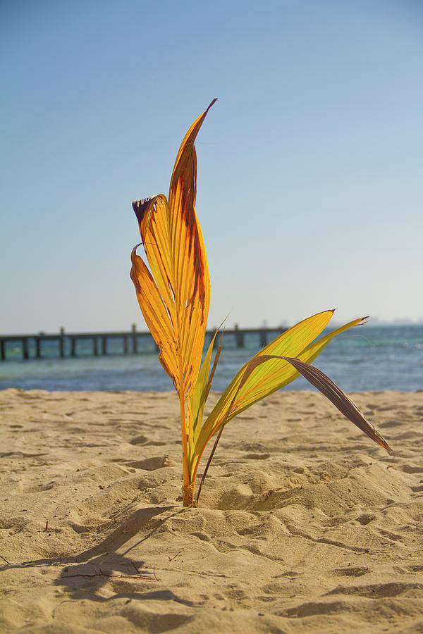 Palm Tree Photograph - Lone Ranger by Dmitriy Mirochnik