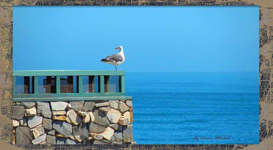 Sea Photograph - Lone Sea Gull by Doreen Whitelock