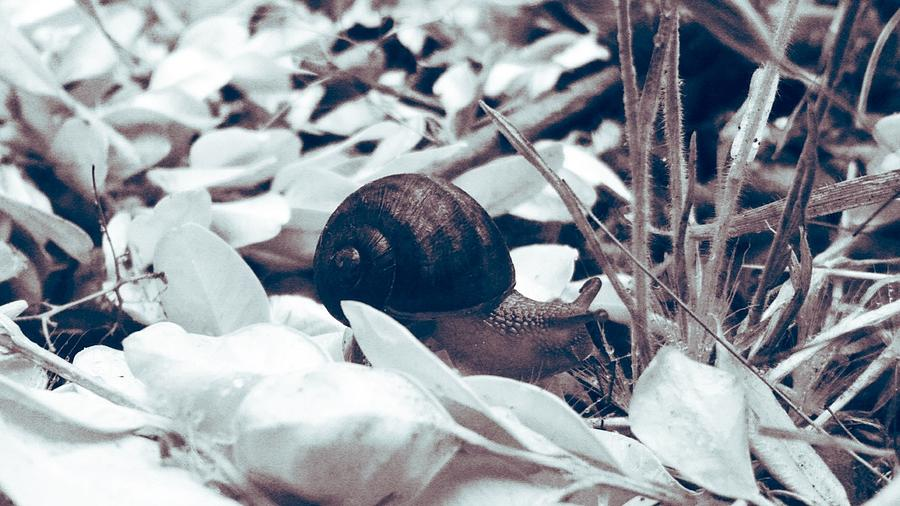 Snail Photograph - Lone Snail by Eddie G