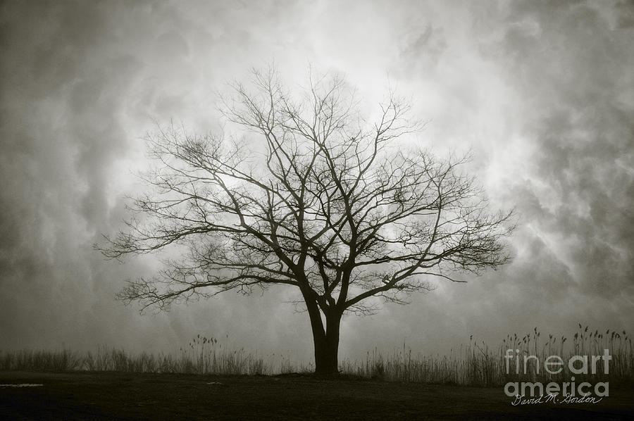 Lone Photograph - Lone Tree And Clouds by Dave Gordon
