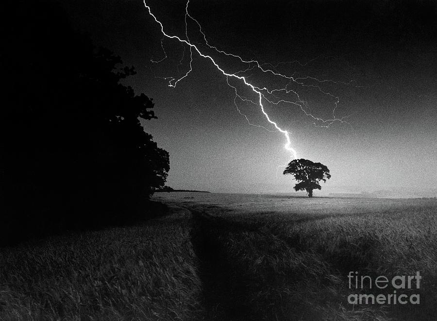 Tree Photograph - Lone Tree And Lightning by Damian Davies