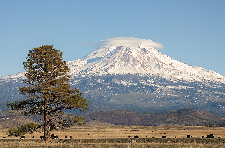 Big Photograph - Lone Tree And Mount Shasta by Loree Johnson