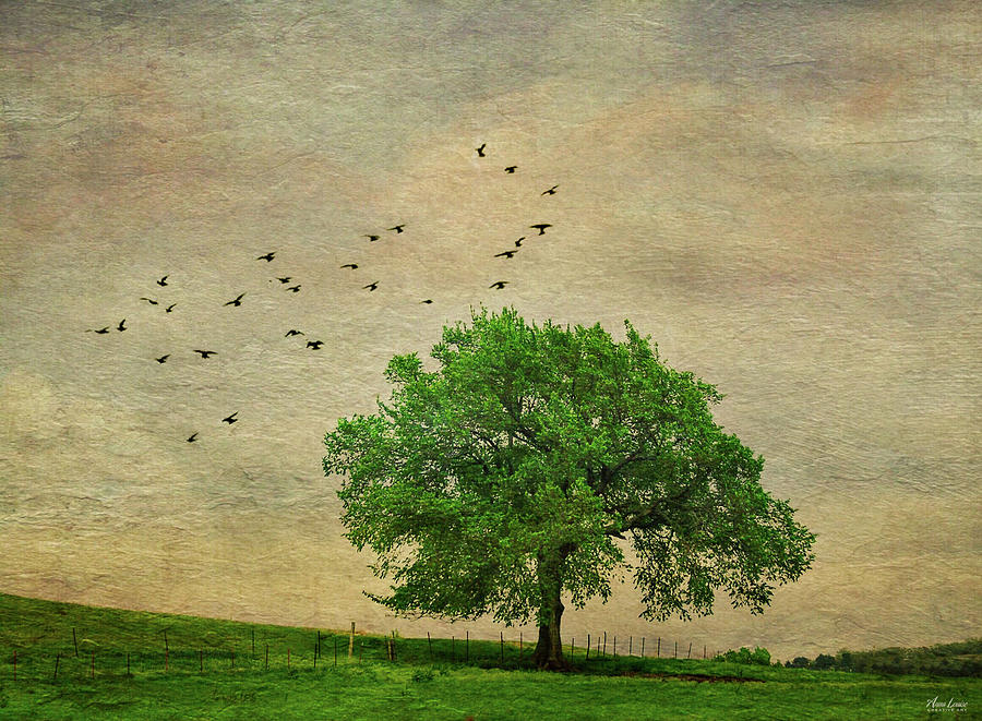 Lone Tree by Anna Louise