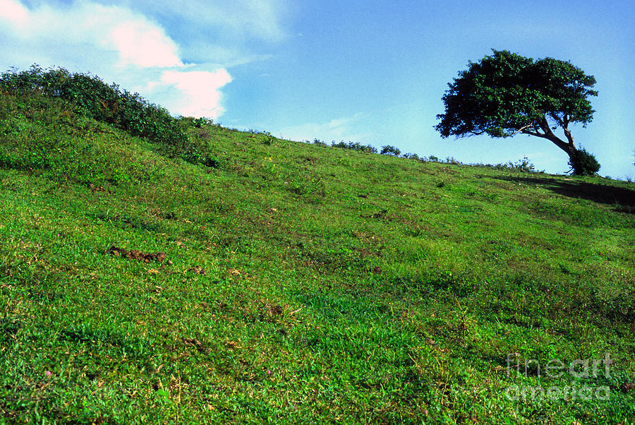 Puerto Rico Photograph - Lone Tree Hill  by Thomas R Fletcher