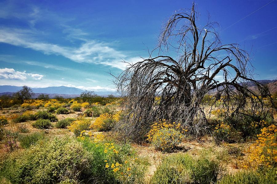 Tree Photograph - Lone Tree In Blooming Desert by Anna Jasper