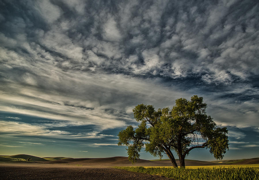 Lone Tree Photograph - Lone Tree In Field by Bob Cournoyer