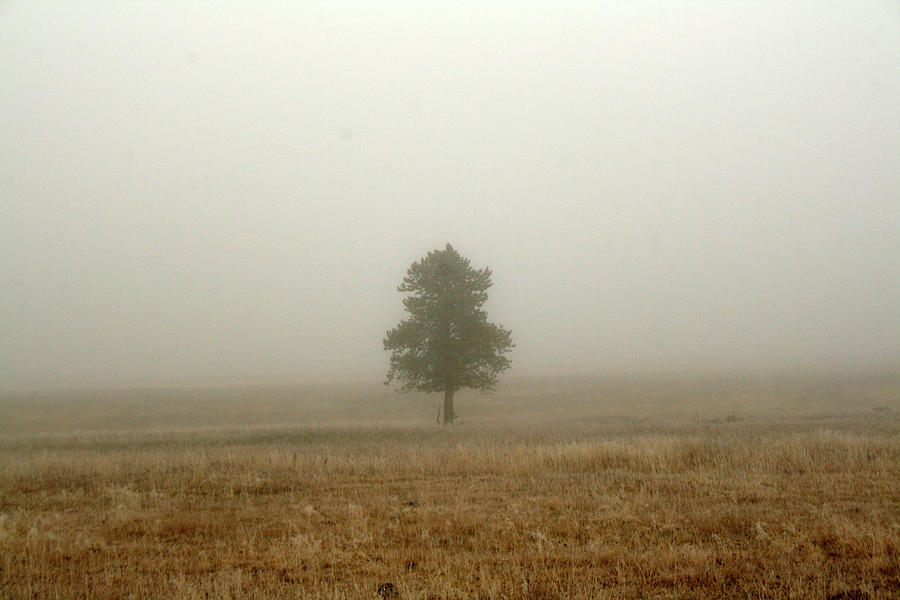 Lone Tree Photograph - Lone Tree In Fog by Suzanne Lorenz