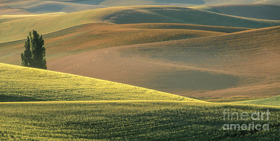 Landscape Photograph - Lone Tree In The Palouse  by Sandra Bronstein