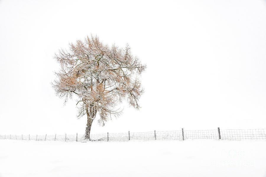 Lone Tree in Winter by Janet Burdon