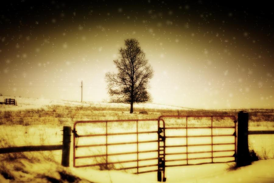 Tree Photograph - Lone Tree by Kelly  Burke