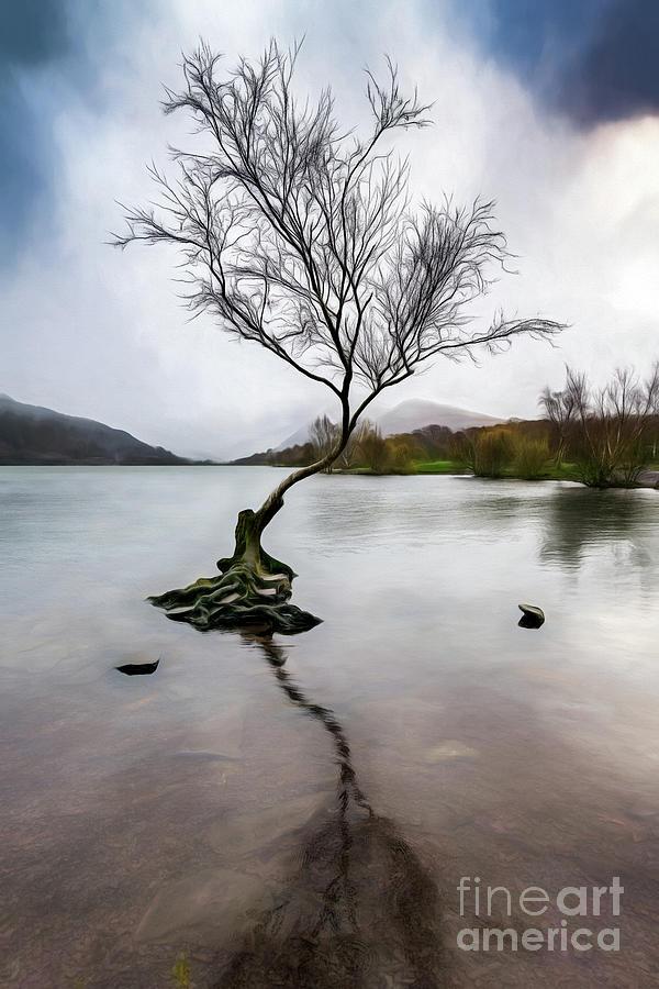 Winter Photograph - Lone Tree Llanberis Lake by Adrian Evans
