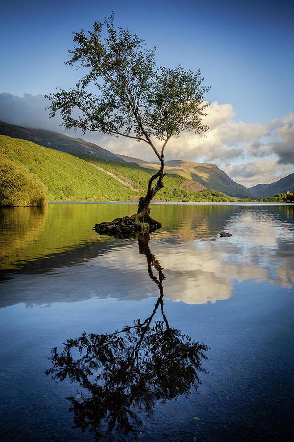 Gwynedd Photograph - Lone Tree, Llyn Padarn by Peter OReilly