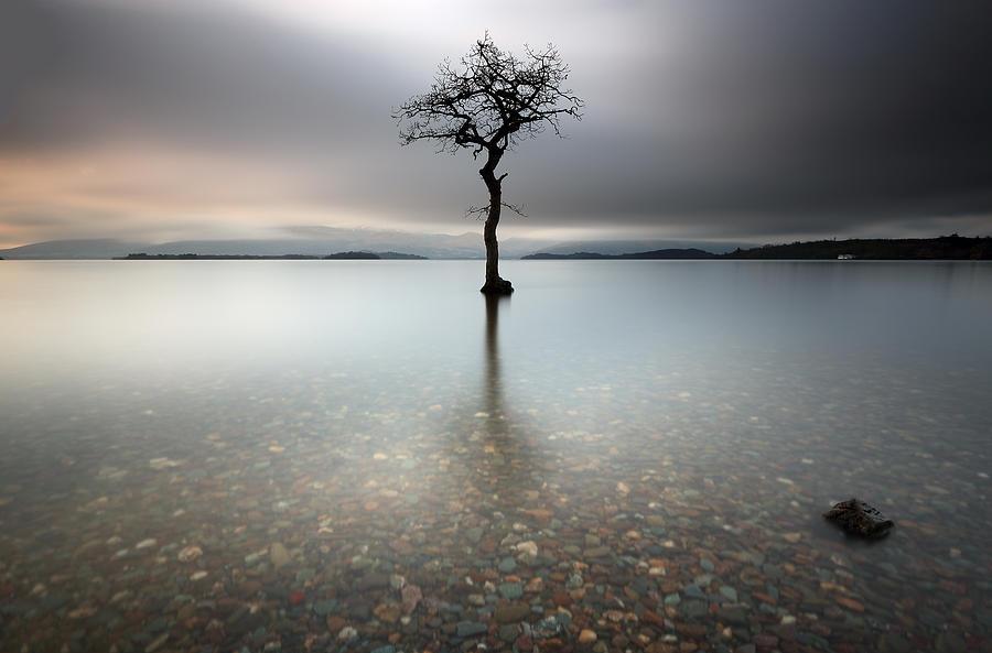 Tree Photograph - Lone Tree Loch Lomond by Grant Glendinning