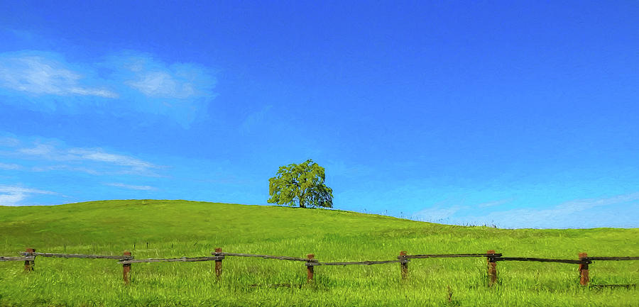 Park Digital Art - Lone Tree On A Hill Digital Art by Randy Herring