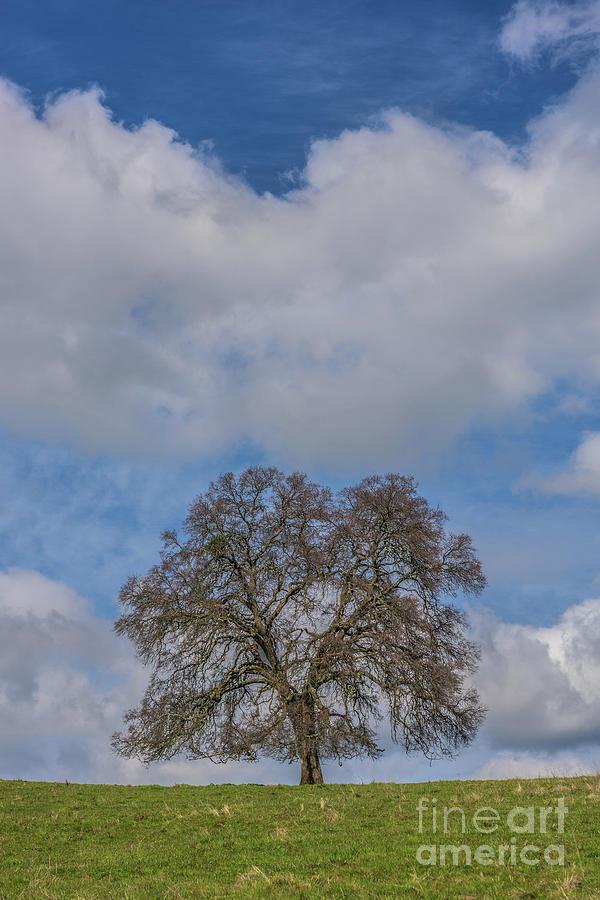 Lone tree on a Hillside by Daniel Ryan