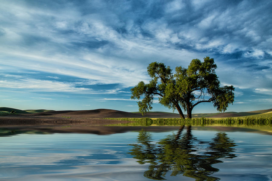 Lone Tree Photograph - Lone Tree Pond Reflection by Bob Cournoyer