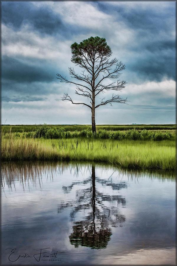 Tree Photograph - Lone Tree Reflected by Erika Fawcett
