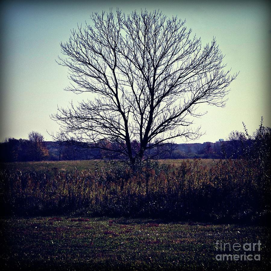 Lone Tree Silhouette in Field - Color Square by Frank J Casella