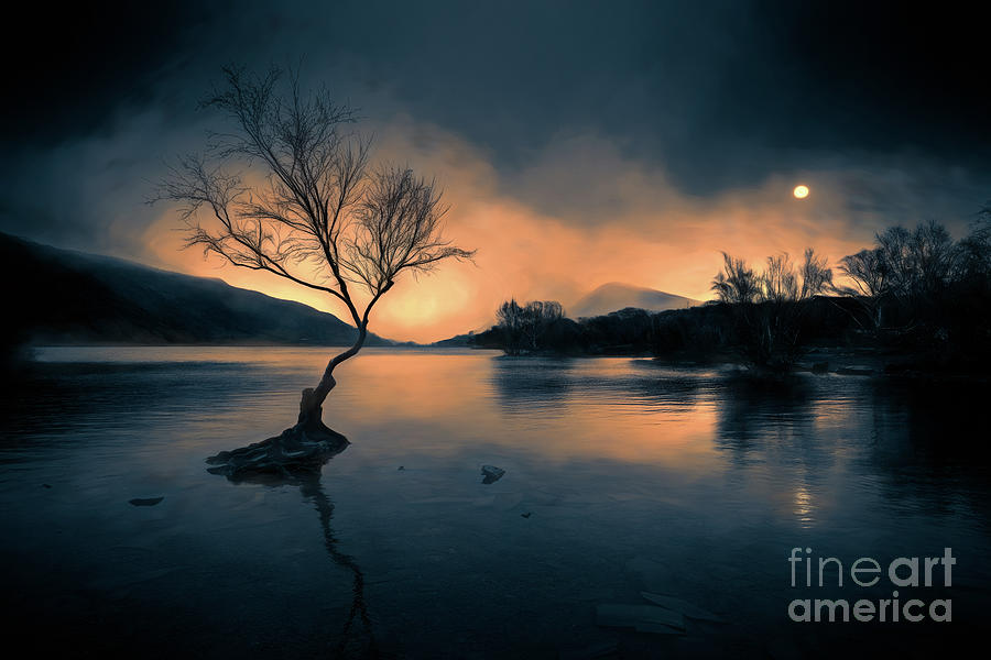 Llanberis Photograph - Lone Tree Snowdonia by Adrian Evans