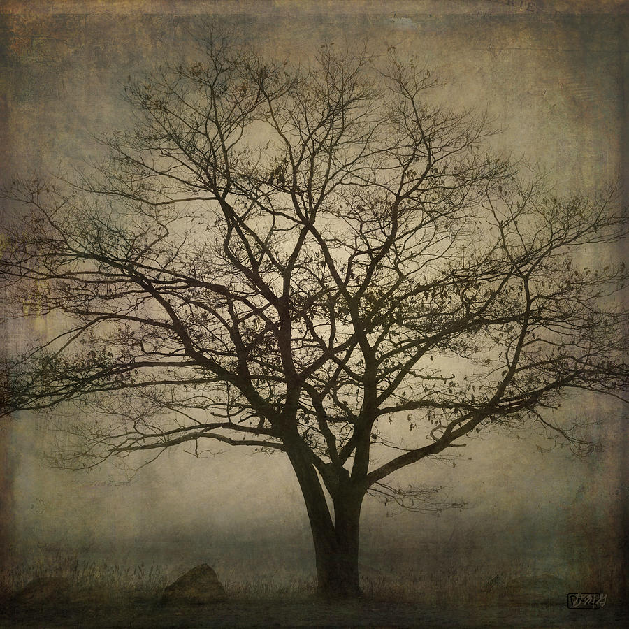 Square Photograph - Lone Tree Sq by David Gordon