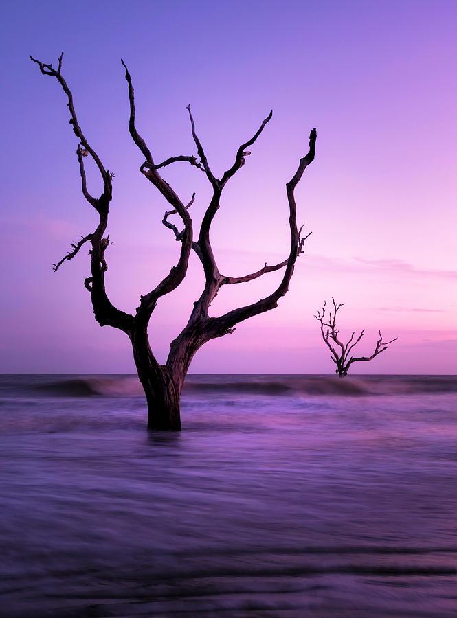 Lone Trees in the Surf, Bull Island, Charleston SC by Tommy  White