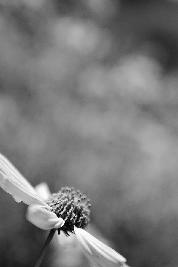 Black And White Photograph - Lone Wildflower Black And White by Jill Reger