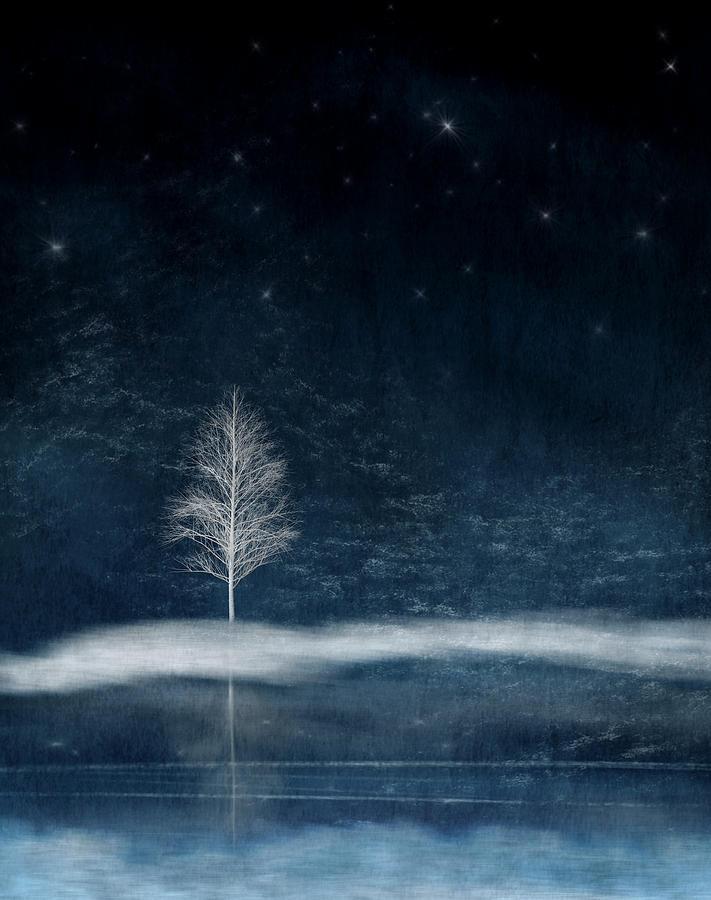 Lone Winter Tree by Paul Bartell