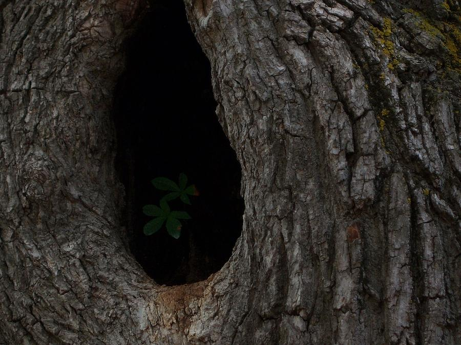 Tree Photograph - Lonely by Carole Hutchison
