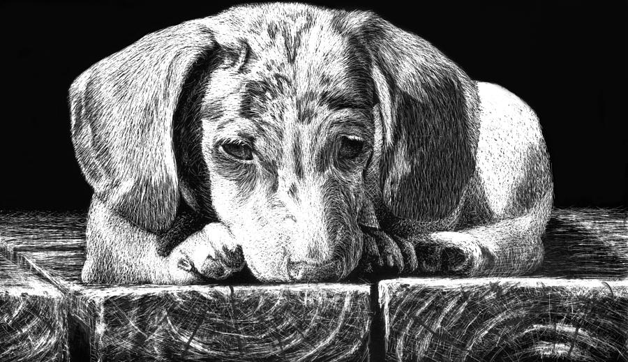 Scratchboard Drawing - Lonely Dog by Nolan Clark