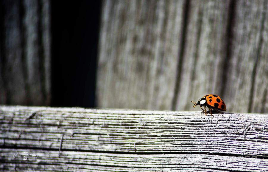 Lonely Ladybug by Ms Judi