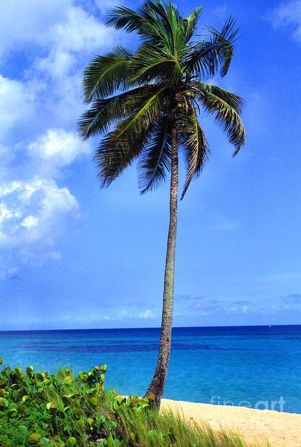 Puerto Rico Photograph - Lonely Palm Tree Los Tubos Beach by Thomas R Fletcher
