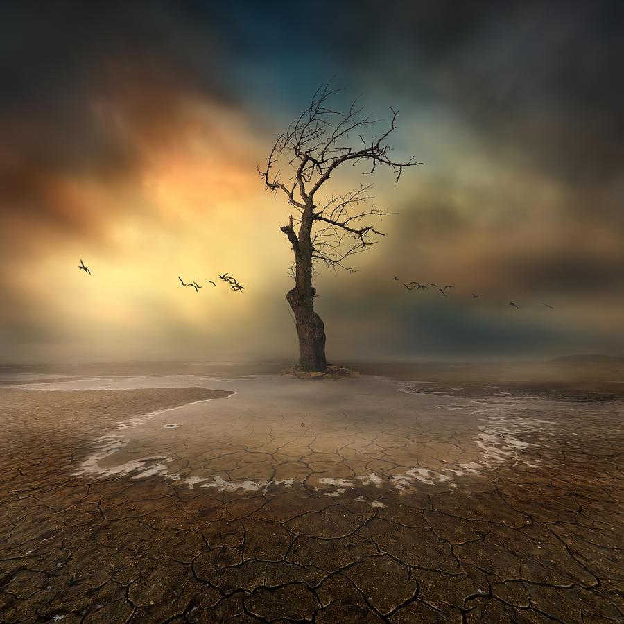 Landscape Photograph - Lonely by Piotr Krol (bax)