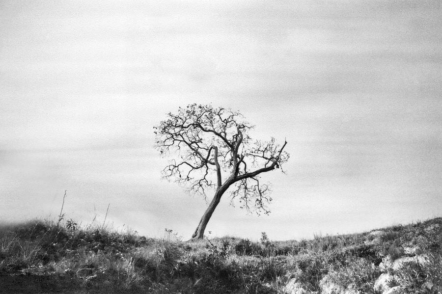 Lonely Tree by Amarildo Correa