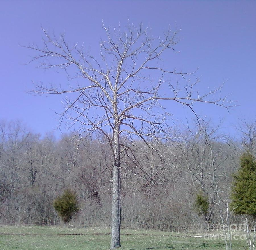 Lonely Tree Photograph by Barb Montanye Meseroll