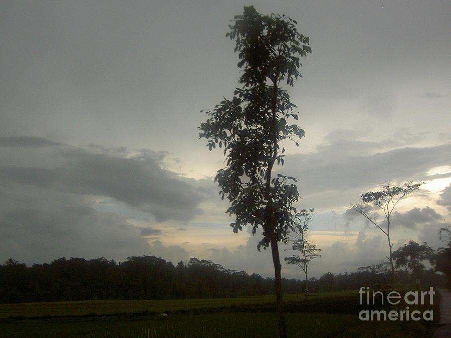 Tree Photograph - Lonely Tree by Budi Koesworo