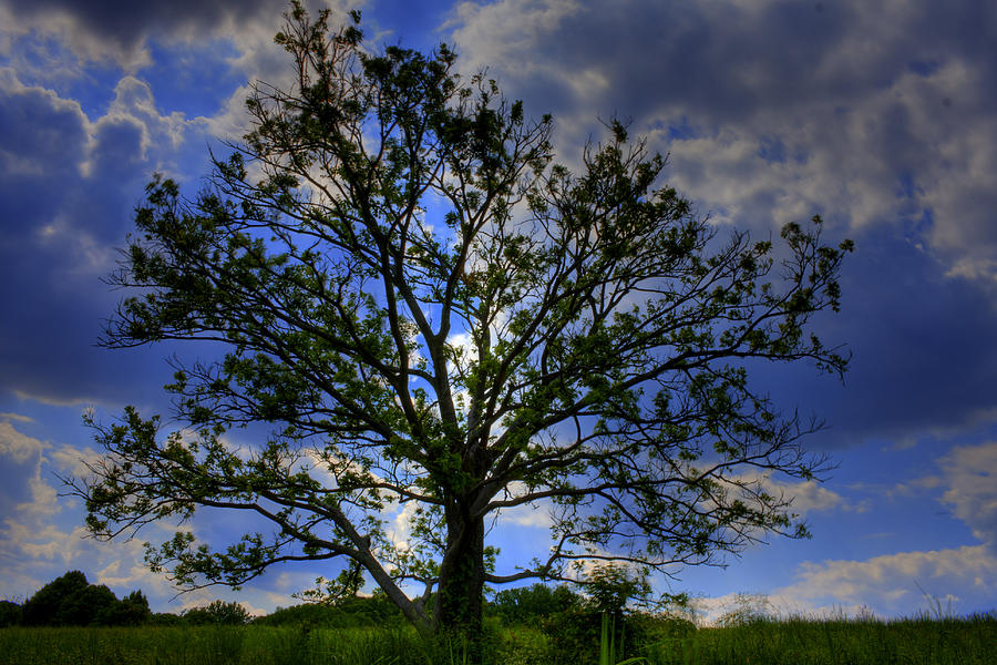 Tree Photograph - Lonely Tree by Kevin Hill