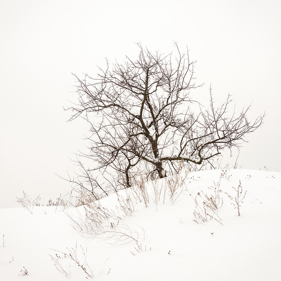 Minimalism Photograph - Lonely Tree On A Hill by Pavel Melnikov