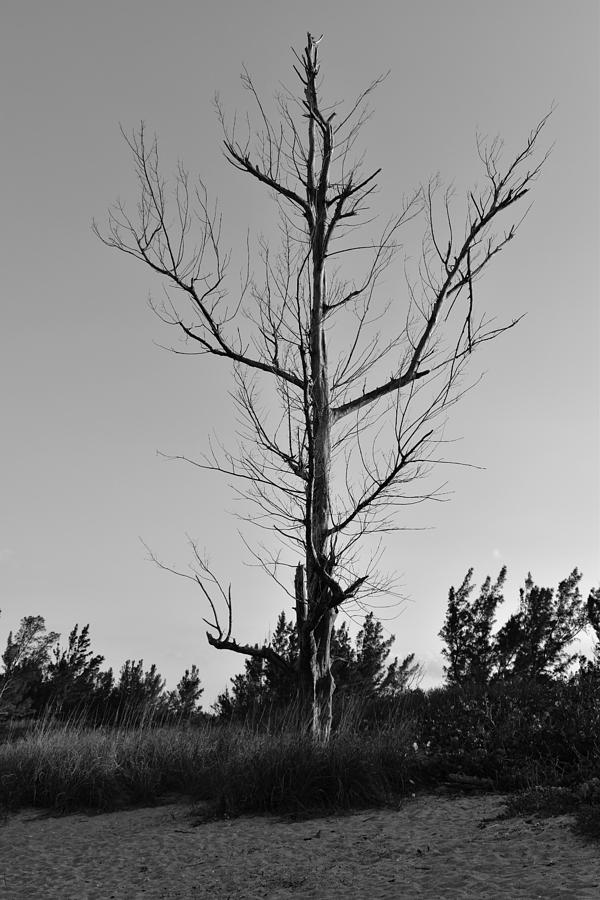 Lonely Tree by Vicki Lewis
