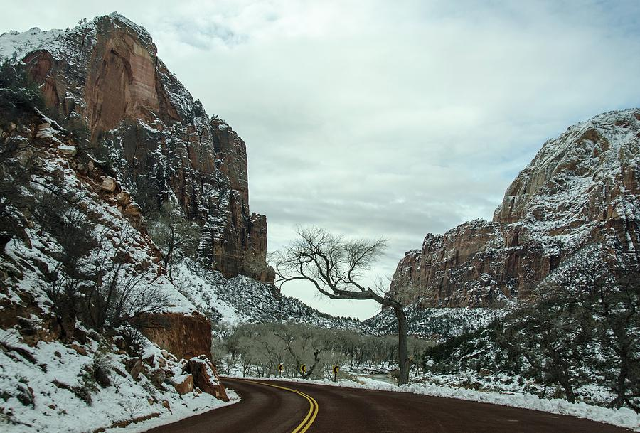 Lonesome snowy winter in Zion by Gaelyn Olmsted