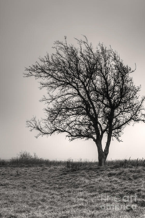 Landscape Photograph - Lonesome Tree by Tamyra Ayles
