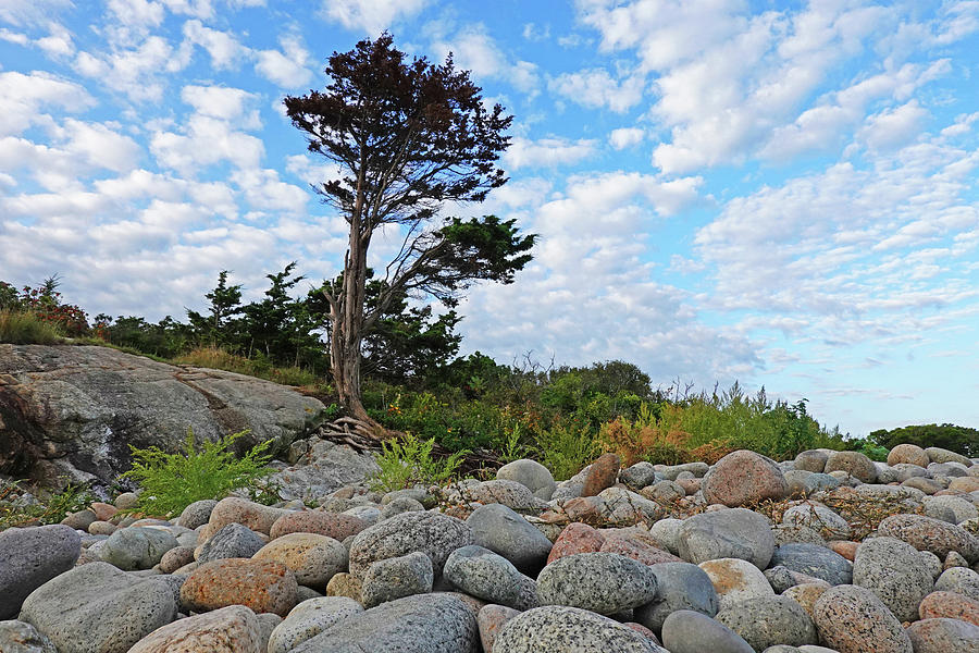 Gloucester Photograph - Long Beach Tree Gloucester Ma by Toby McGuire